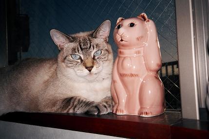 招き猫001.JPG