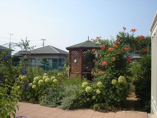 8月の庭001.JPG